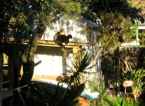 Croydon Park-backyard oasis for cats