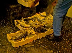fresh catch, Cinque Terre