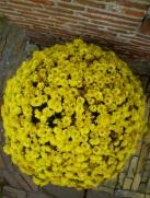 Flower ball, Volendam, The Netherlands