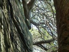 Extreme tree