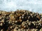 Tidal rocks, Port Macquarie, Australia