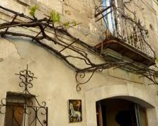 Grapevine, Arles