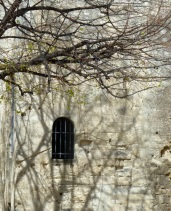 Tree shadow play, Arles