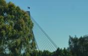 Anzac Bridge peek