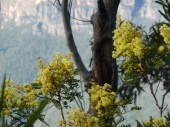 Wattle and canyon