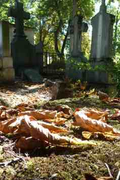 Pere Lachaise leaves, Paris