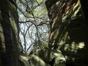 Nielsen Park, Sydney