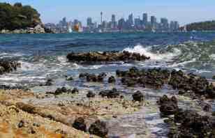 Sydney Harbour- rock platform