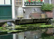 Delft,waterhen nest