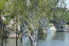 Pont d'Avignon, Rhone River, Fran ce