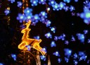 Christmas lights in Sydney