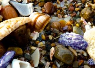 purple sea shell, Port Macquarie, Australia