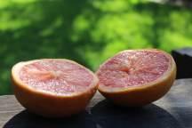 Sydney blood oranges