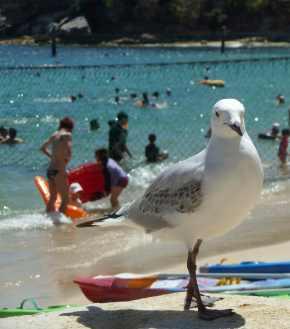 warmth - coastal Australia