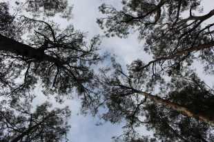 Tahune forest, Tasmania