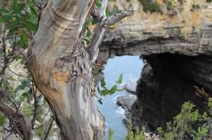 Scale- Tasmania, Australia