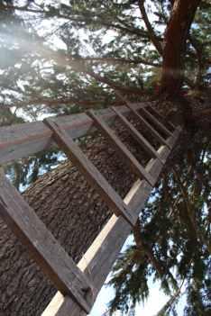 Australia- treehouse
