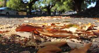 Australia- leafy road