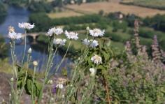 Dordogne River- Dome